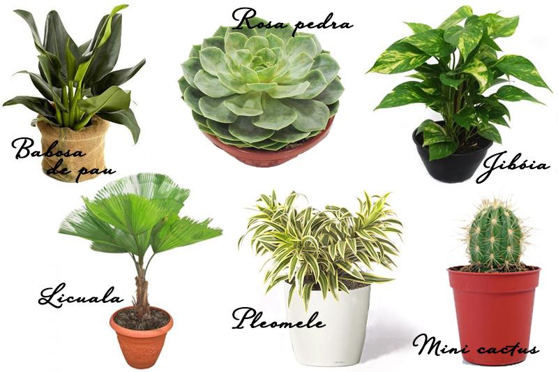 plantas para jardim muito sol:gostado das dicas para montagem de jardim de inverno! Eles são muito