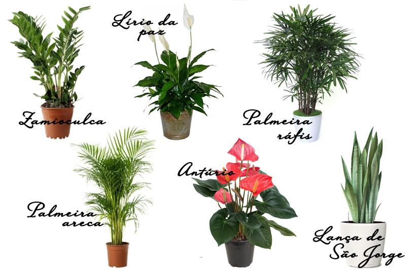 flores de jardim e seus nomes:Plantas para Jardim de Inverno – Sugestões